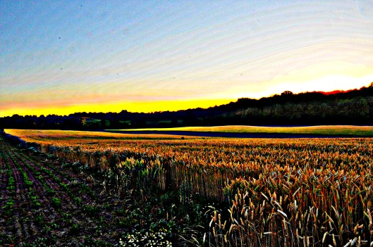 stylized field