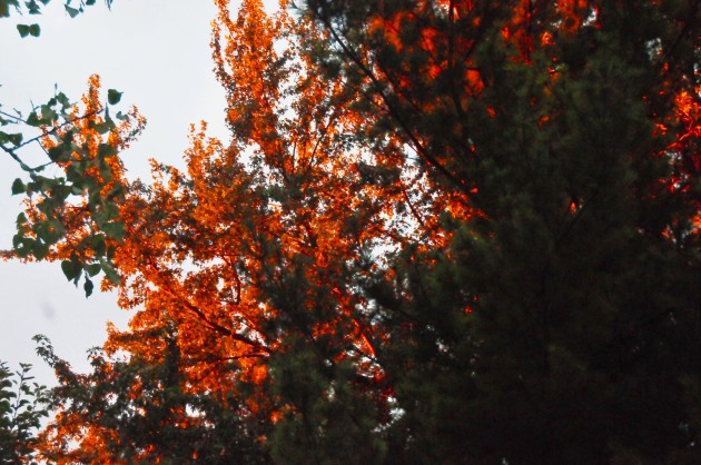 trees on fire 1