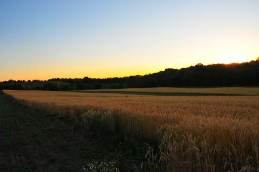 farm land 2016-06-28 028