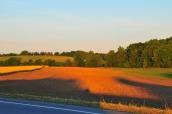 farm land 2016-06-29 015