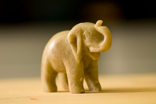 elephant 2017-10-02 004